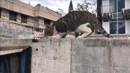 这是我见过第一只干正事的猫咪, 这身手没的说