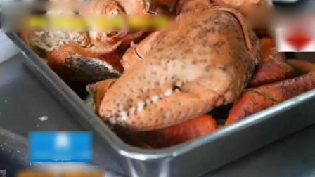1250元的椰子蟹, 刚煮熟就被师傅现场分解, 蟹肉真的好肥!