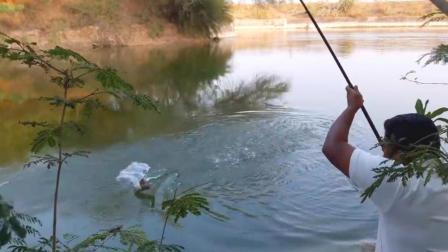 钓鱼: 刀鳅出水, 看着好爽