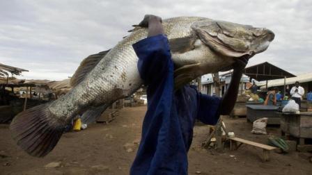 非洲人为什么不种粮食? 非洲人: 干旱的地下都可以挖出鱼!