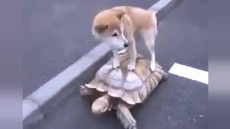 别笑, 这个是我的坐骑