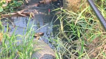 钓鱼: 提竿时觉得鱼不小, 出水后原来这么小