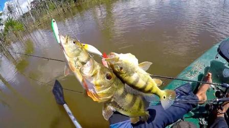 钓鱼: 两根钓竿三条鱼, 手不够用啊