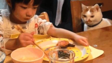 猫咪想吃鱼, 把小主看的心里直发毛, 太可爱了