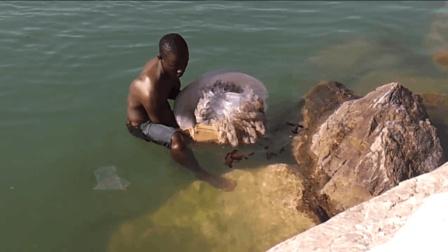 海岸边漂来了一异物, 男子徒手将其捞起, 网友: 真不怕死