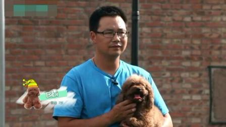小泰迪怎么训练大小便 狗狗训练技巧大全 训练狗狗的方法手势图