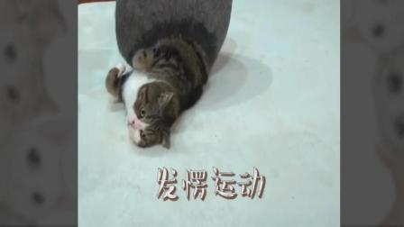 躲在帽子中的可爱猫咪: 出来翻个身, 回去接着睡