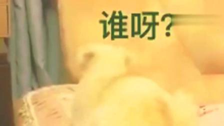 二货猫咪刘二豆等外卖, 不知道的还以为你在外边有了别的母猫了~