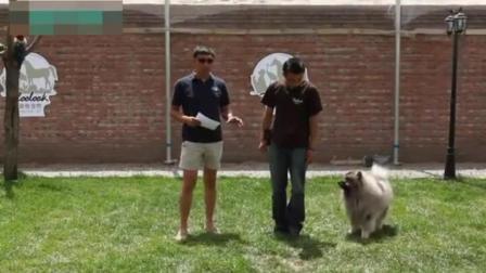怎么训练狗狗站起来走路 如何让狗狗不叫 狼青犬训练视频