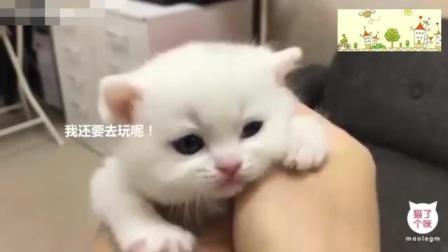一只被绑架的奶猫, 萌化了, 简直太可爱了