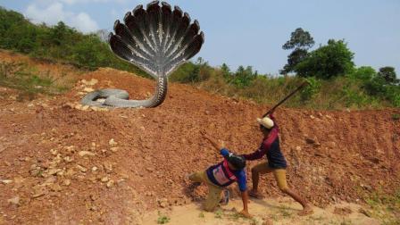 上山抓蛇, 农村小伙看到一条裂缝, 把头伸进一看, 吓得不轻啊!
