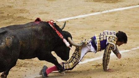 西班牙: 遭公牛狠揍的斗牛士, 被戳断肋骨痛苦万分的表情!