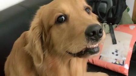 主人说不要狗狗了, 狗狗听到真不要它的时候, 表情都变了, 生气了