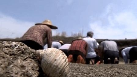 广东省潮汕市的海山镇 村民每年都会祭拜一堵石墙 这是为什么呢