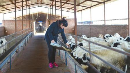 为什么现在农民养羊都不赚钱了? 说出来你都不敢相信