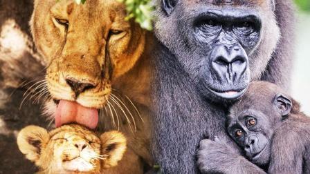 感人! 被抓拍的动物母爱瞬间让人看哭了