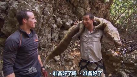 贝爷和队友合作抓了只大鳄鱼, 晚餐可以吃撑了!