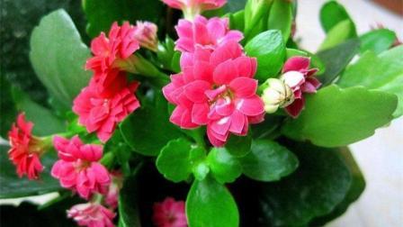 家中花草蒙了一层灰, 教你用它喷一喷, 让你的盆栽花卉长的快一倍