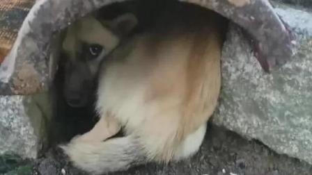 流浪狗妈妈满眼乞求的看着人类, 只求人类收养它的狗宝宝!