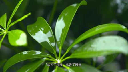 贵州都匀农业发展宣传片