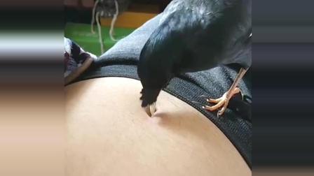 这只鸟以为里面有虫子, 接下来竟看到这一幕, 瞬间笑喷了!