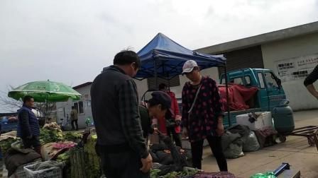 九江市蔬菜批发市场买菜视频