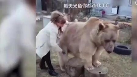 战斗民族的女人给熊洗澡, 熊: 打又不敢打, 只能装傻卖萌咯