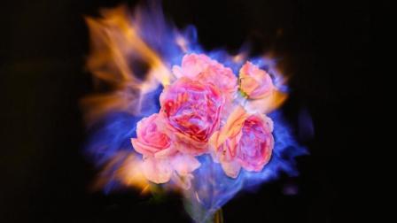他每天烧一枝花悼念亡妻