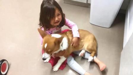 """治愈系""""暖男""""柯基犬安慰哭泣的小女孩, 太有爱了!"""