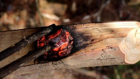 用火烧出来的餐具, 这个野外技能你会吗?