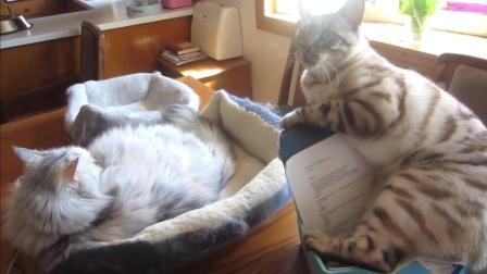 你家的猫也这样吗? 有窝不好好躺, 非要待在一些奇怪的地方