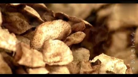 《舌尖上的中国》陈皮的制作方法, 只取新鲜果皮, 果肉则弃之不用