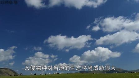 中国成物种入侵危害严重国家之一, 但对入侵物种你了解多少呢?