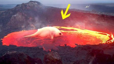EyeOpener 谁住在火山底部?又有多少未知生物呢?