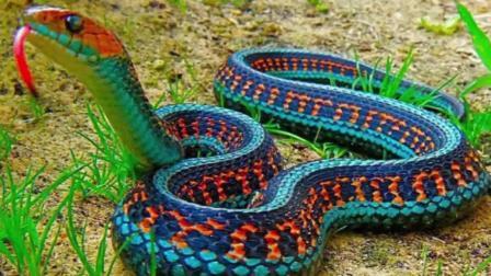 世界上最漂亮的10种蛇, 蛇类恐惧者慎入(中文字幕)!