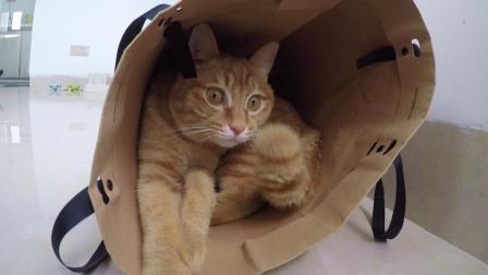 铲屎官给3只猫称体重, 一个妙招让喵子就范, 结果: 大橘为重!