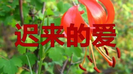 老歌经典, 李茂山《迟来的爱》这是一份迟来的爱情, 听得心醉!