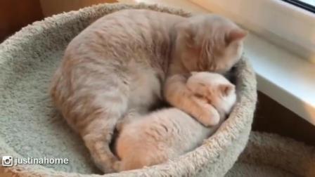 猫妈妈对小喵星人爱护有加