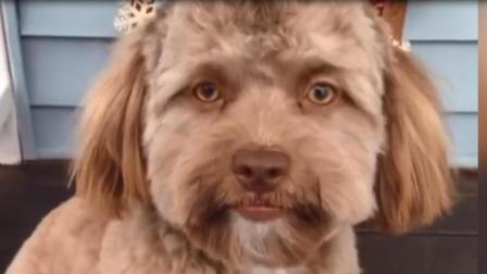 宠物狗外貌跟人相似度80%, 狗主人: 没觉得长得像谁啊!