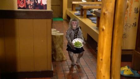 猴子在酒馆打工30年, 工资只要香蕉就行, 老板乐开了花