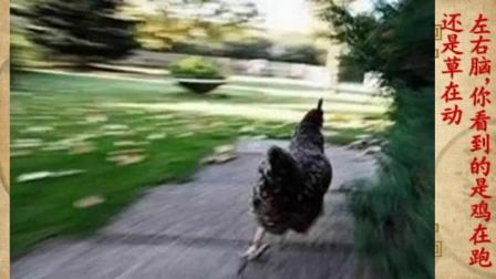 左右脑, 看到鸡在跑说明是普通人, 看到草在动说明你是聪明人! 你呢