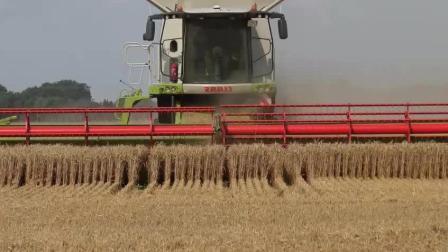 美国粮食产量为什么世界第一, 这么高效率的收割机, 分分钟收几十亩