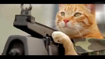 搞笑猫视频