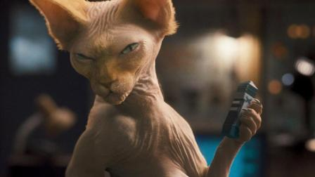 这是我见过最丑的猫, 身上一点毛都没有, 太丑了!
