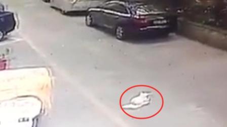 因一泡尿的误会 流浪狗被人从三楼扔下摔死