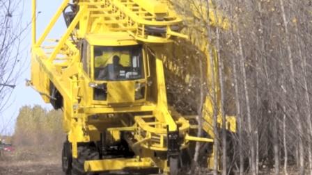 老外发明树林收割机重45吨, 3m高树木砍伐像砍麦子, 效率太吓人!