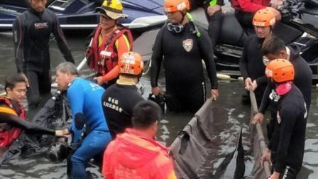 三头虎鲸被活活饿死, 原来胃里被塑料袋填满了!