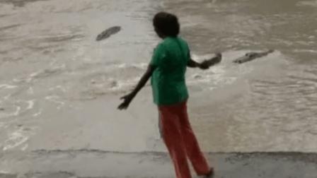 碰到鳄鱼怎么办? 澳大利亚一女子, 拿着拖鞋就敢和鳄鱼硬钢!