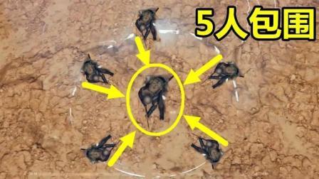 绝地求生: 包子大的毒圈, 被5人包围, 天才少年丝血未伤完成5杀