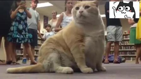 自从胖猫来到图书馆之后, 它完全改变了人们的生活